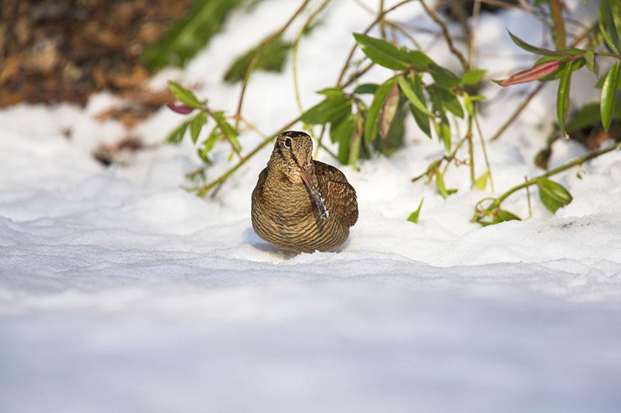 Pic: Oliver Smart / Alamy