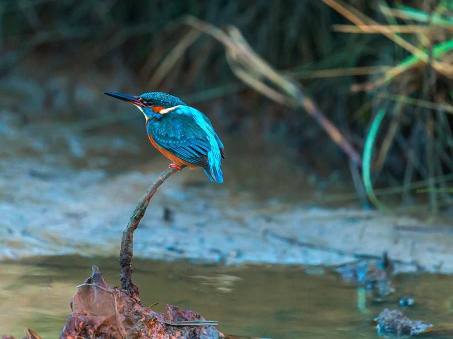 Pic: Wild Birds, Alius Imago/Alamy