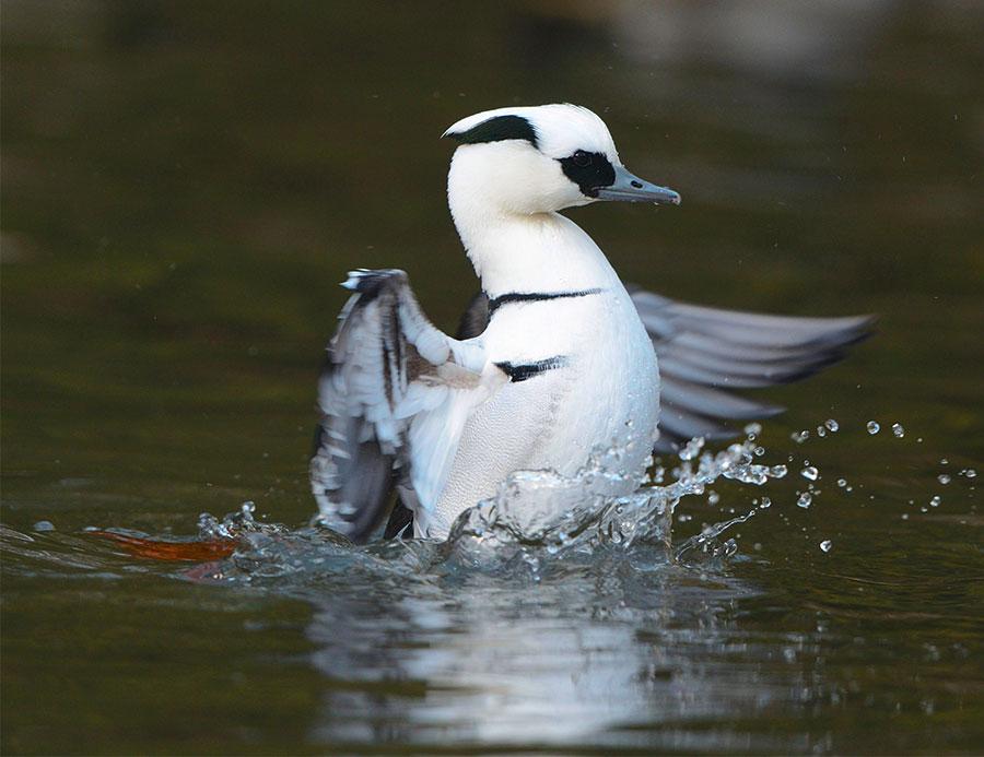 Pic: Tierfotoagentur / Alamy