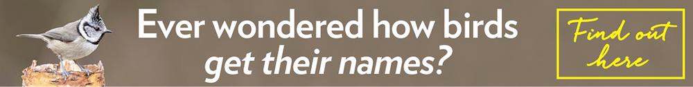 Names.png
