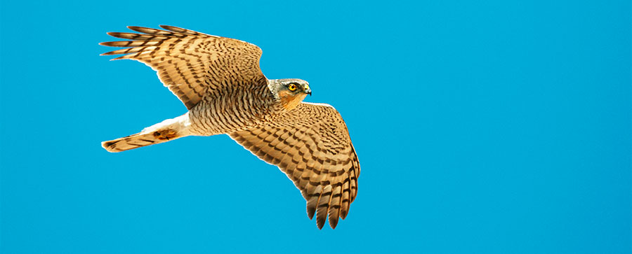 Nature Photographers Ltd / Alamy
