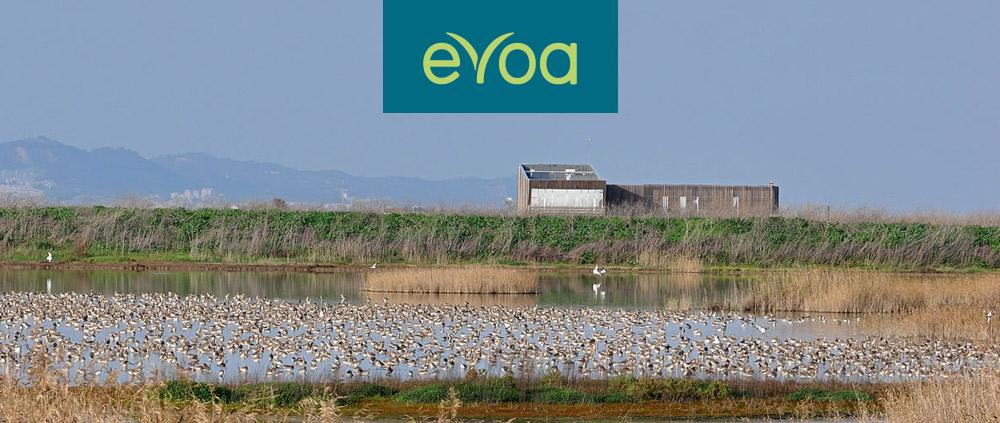 evoa-header.jpg