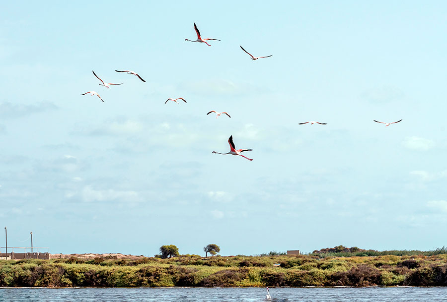 Flamingoes taking flight over the salt lakes at Santa Pola - Colin Majury/Alamy