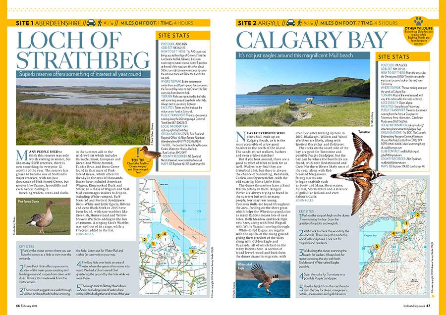 Go-Birding---Part-1-(Low-res-PDF)-1.jpg