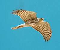 Nature Photographers Ltd/Alamy