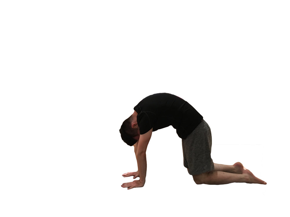 4. As you breathe out, walk your hands towards you, bringing your wrists in line with your shoulders and knees again in line with hips. Round your back towards the sky, sucking your belly inwards.