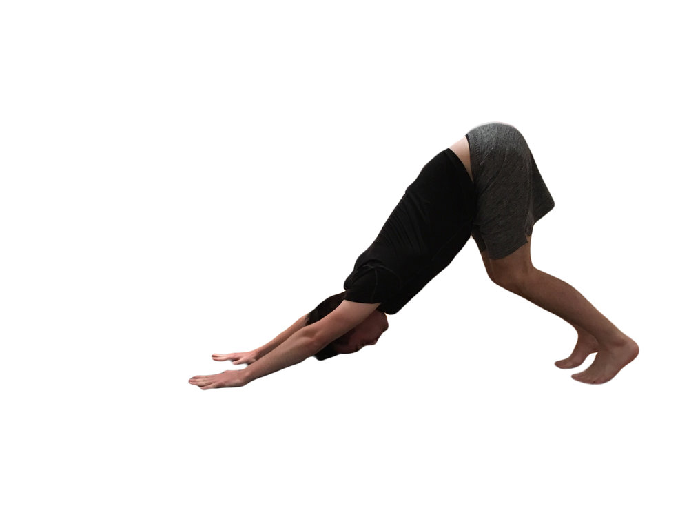 5.Breathe in and tuck your toes and lift your hips upwards, push into each finger tips, remember it's okay to bend your knees in downward dog.