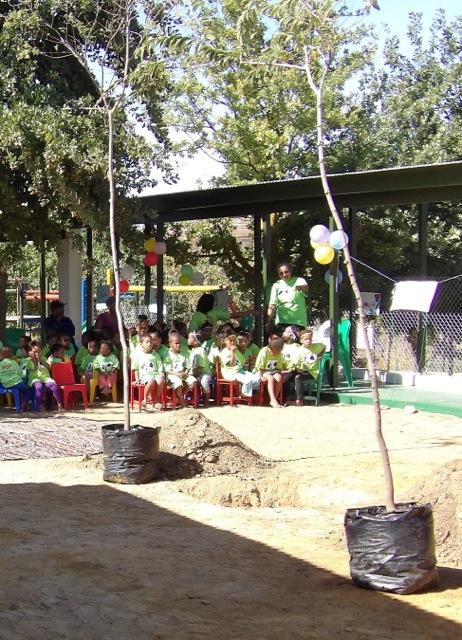 Bäume kurz vor dem Einpflanzen - Innenhof einer Grundschule in Südafrika   Wer einen Baum pflanzt, tut das in aller Regel mit einer Vorstellung davon, wie ein großer Baum mal aussehen wird. Wachsen wird der Baum dann ganz alleine.
