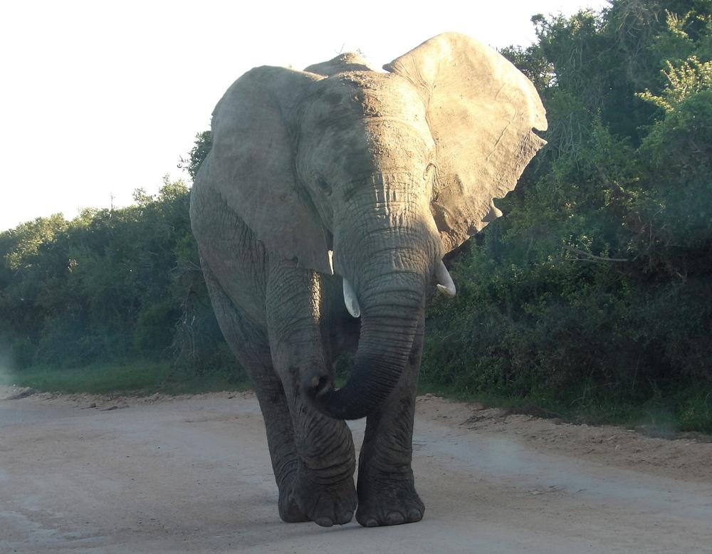 Respekteinflößender Kollege auf der Straße (Südafrika, April 2015)
