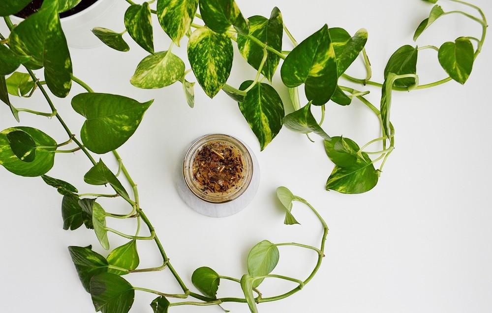 My DIY Green Tea + Sugar Scrub