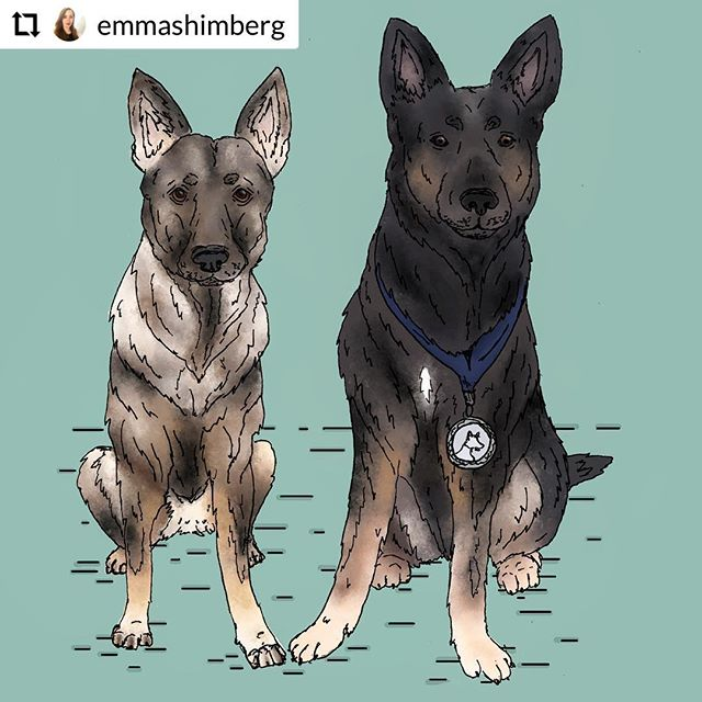 Ava & Ritter 🐾 | pen and digital watercolor | 2019 #germanshepherd #dogs #k9 #illustration #illustrator #art #designer #graphicdesigner #create #draw #love #pooches #portrait #petportrait #ears #fuzz #woof #draw