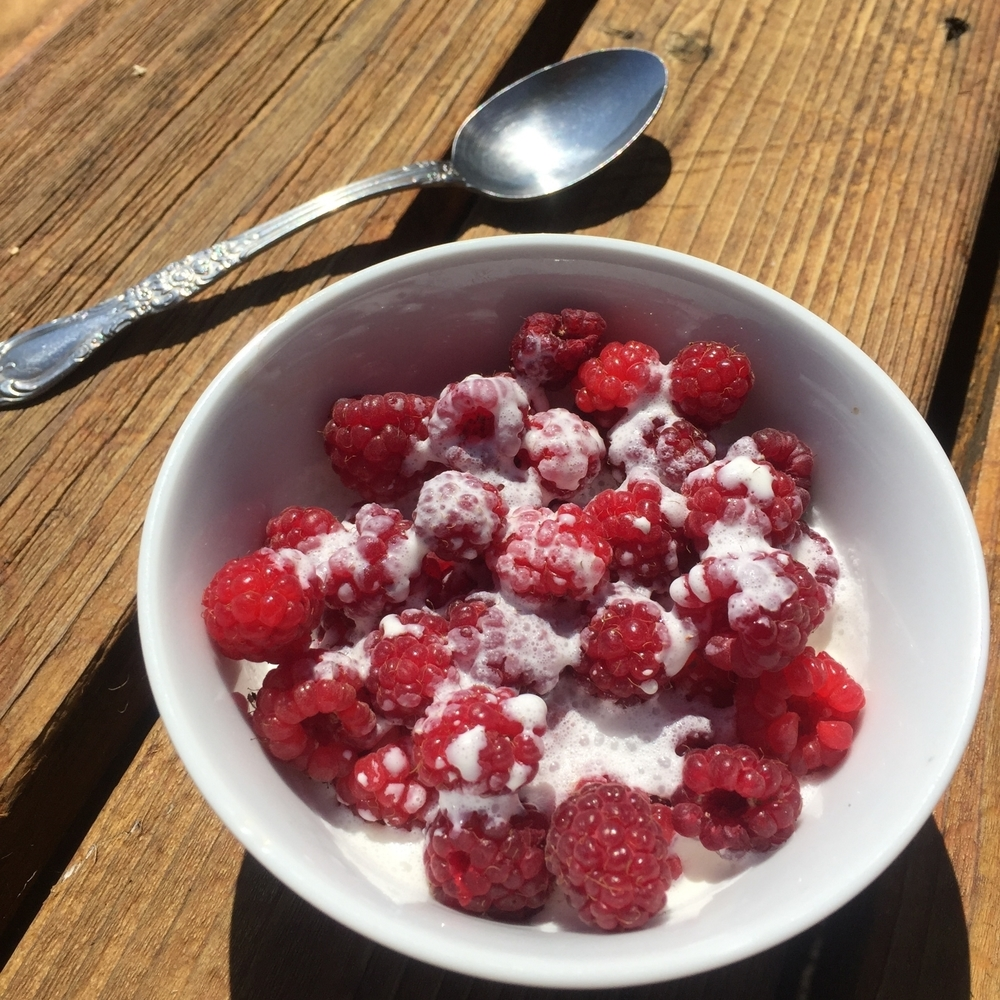 Raspberries right off the bush with cream. So simple. So delicious.