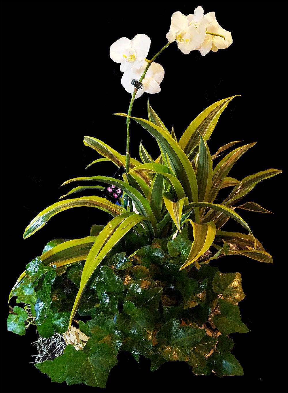 plantwhiteflower.jpg