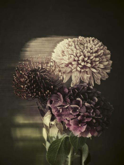Flower_Tina_Trumpp.jpg