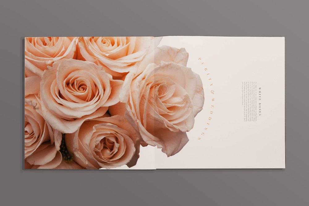 flower12 copy.jpg