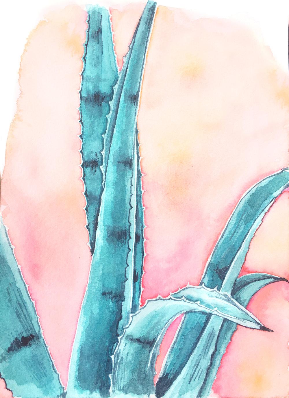 agave on pink edit.jpg