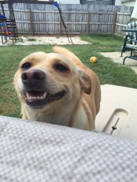 Meet Skylar! AKA Sky-Sky
