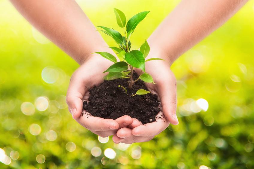 stock-photo-hands-holding-sapling-in-soil-on-black-51435571.jpg