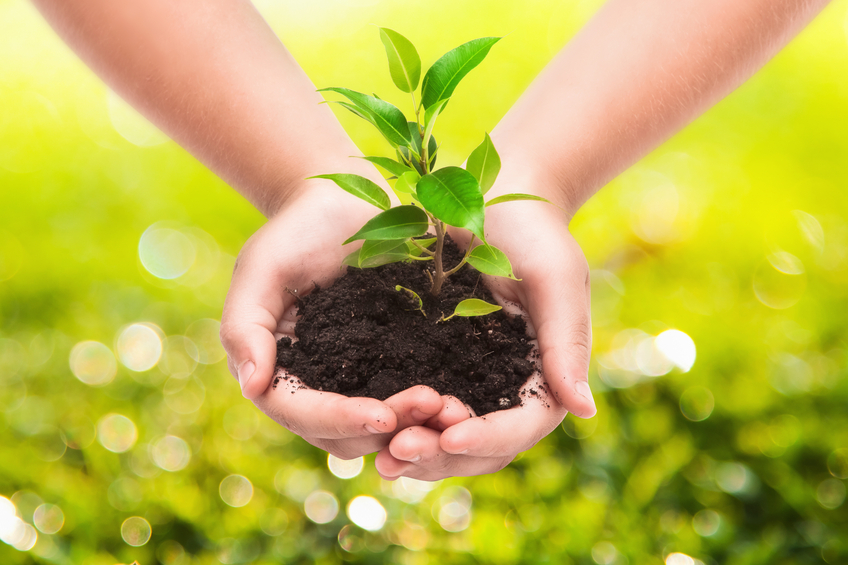 Hand Plant Small.jpg