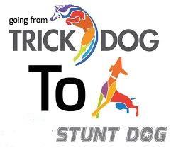 Stunt Dog.jpg