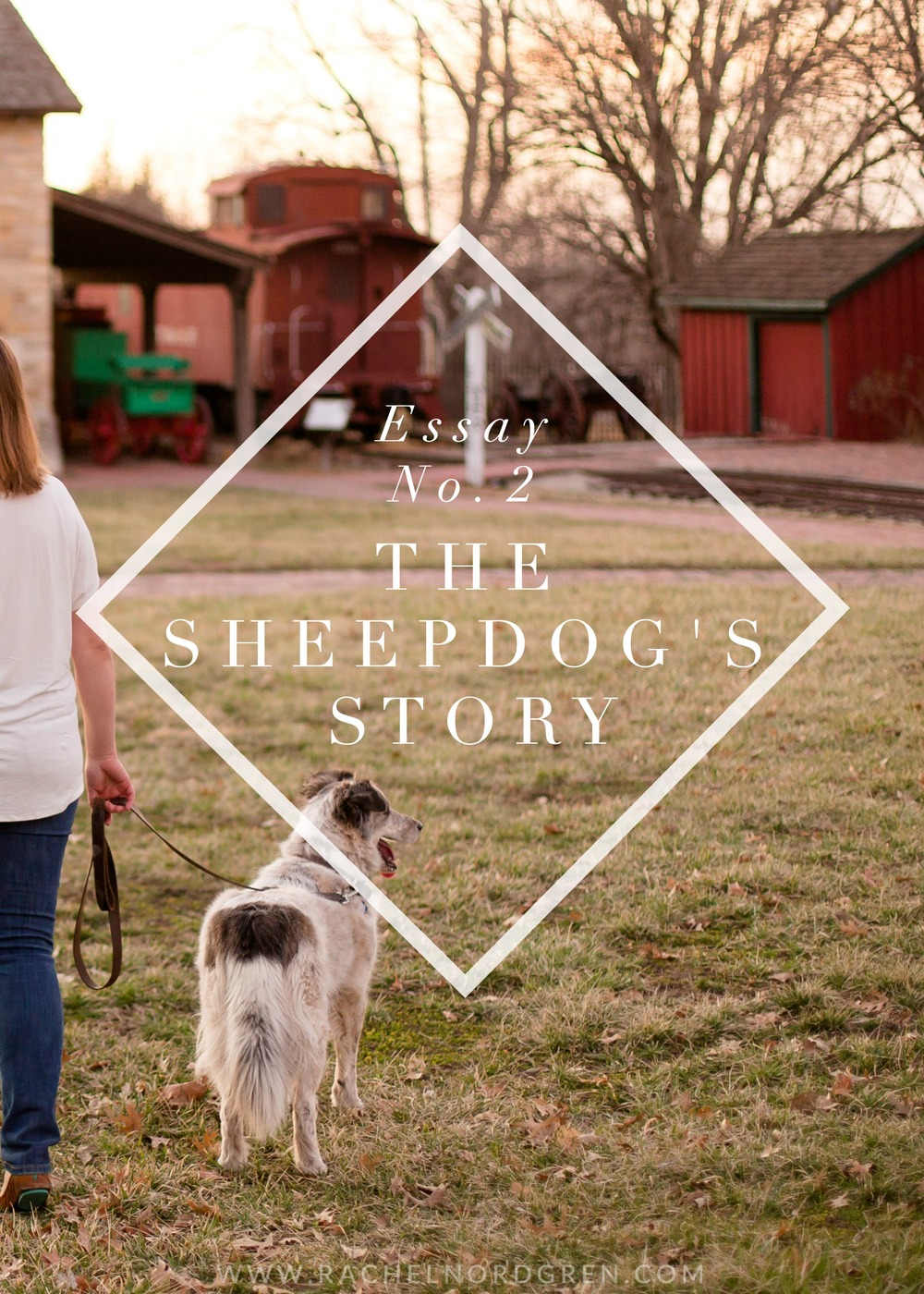 blog rachel nordgren the sheepdog s story an essay from rachel nordgren