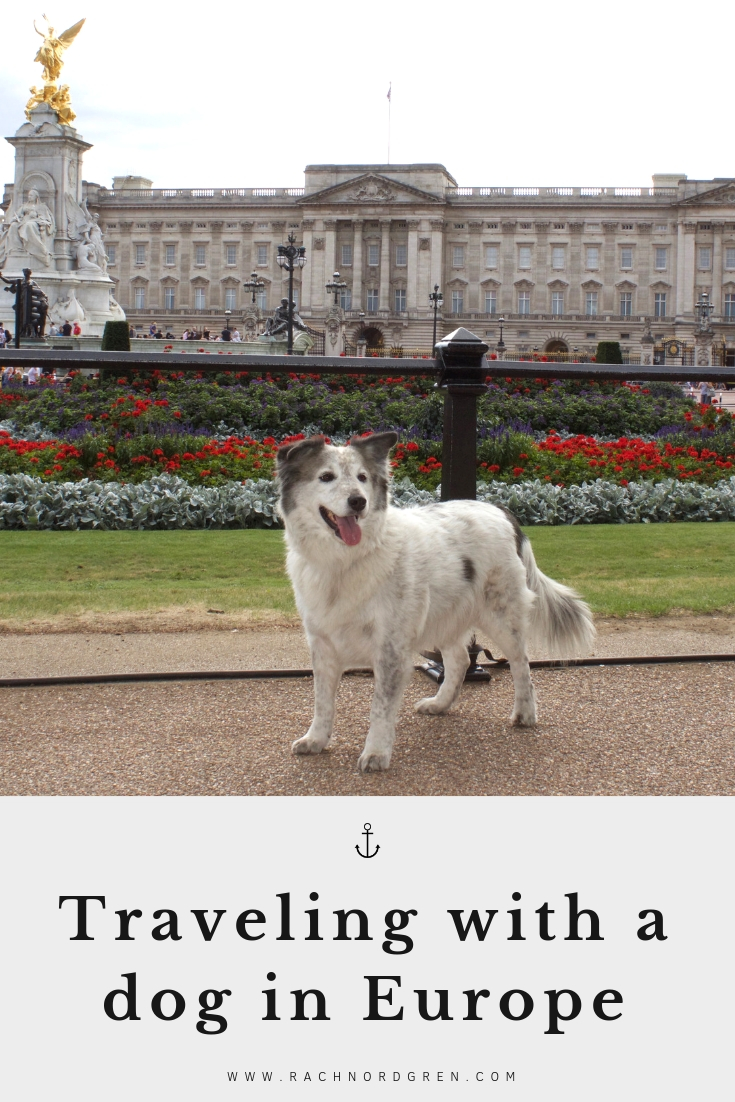 Traveling with a dog in Europe