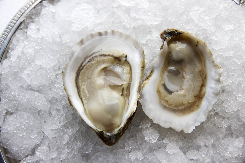 Pangea-Shellfish-East-Coast-Oyster.jpeg