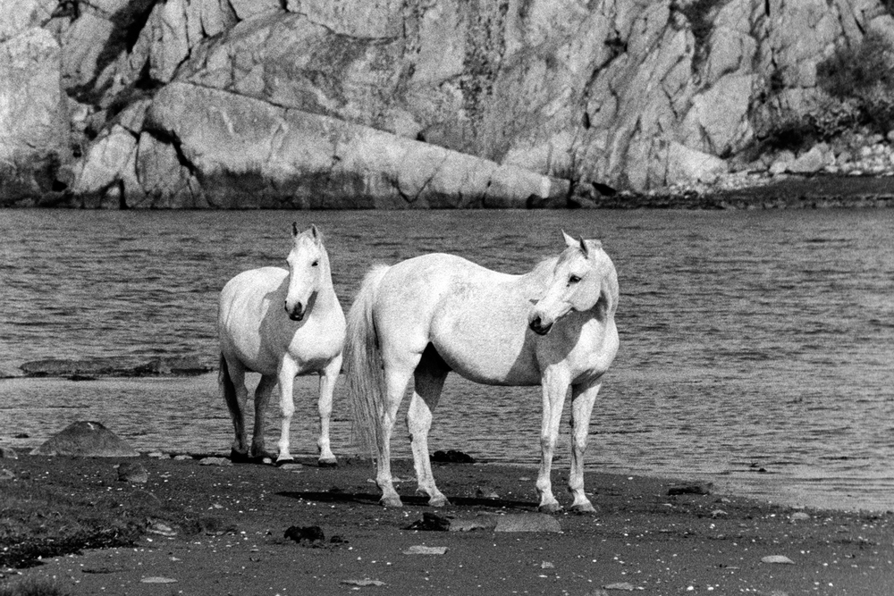 white_horses edits.jpg