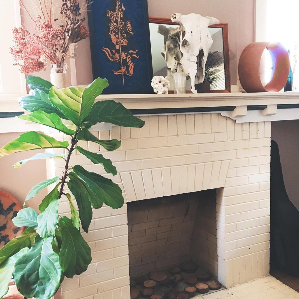never met a fiddle leaf fig i didn't like