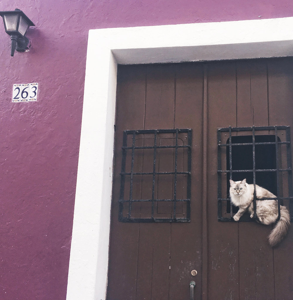 my favorite san juan cat
