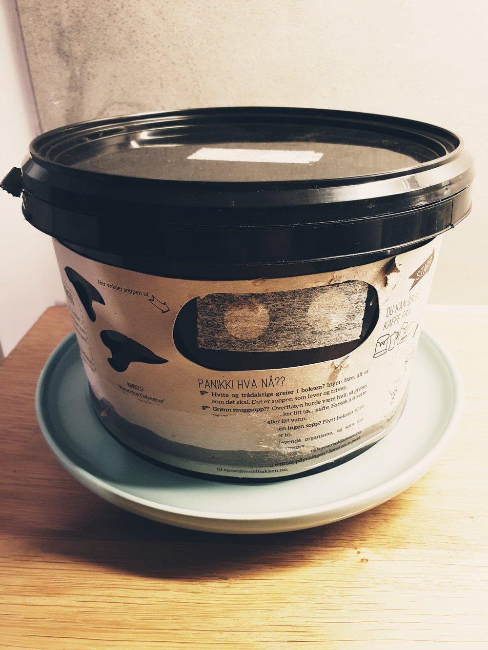 Tips!  Plasser gjerne spannet i en underpotte eller tallerken. På den måten skaper du et fuktig miljø. Dette gir større sjanse for sopp, og er spesielt gunstig dersom du har et tørt inneklima eller ikke har noen fuktig vinduskarm du kan bruke.