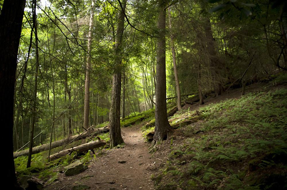 morotta-forest-path.jpg