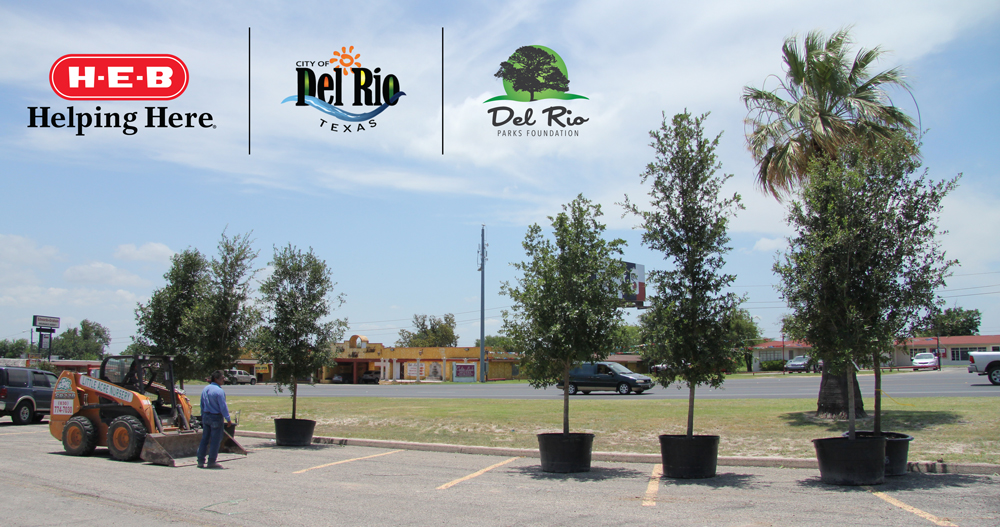 Little acres tree farm landscaping has planted over 30 trees in the newly designed Del Rio Civic Center space