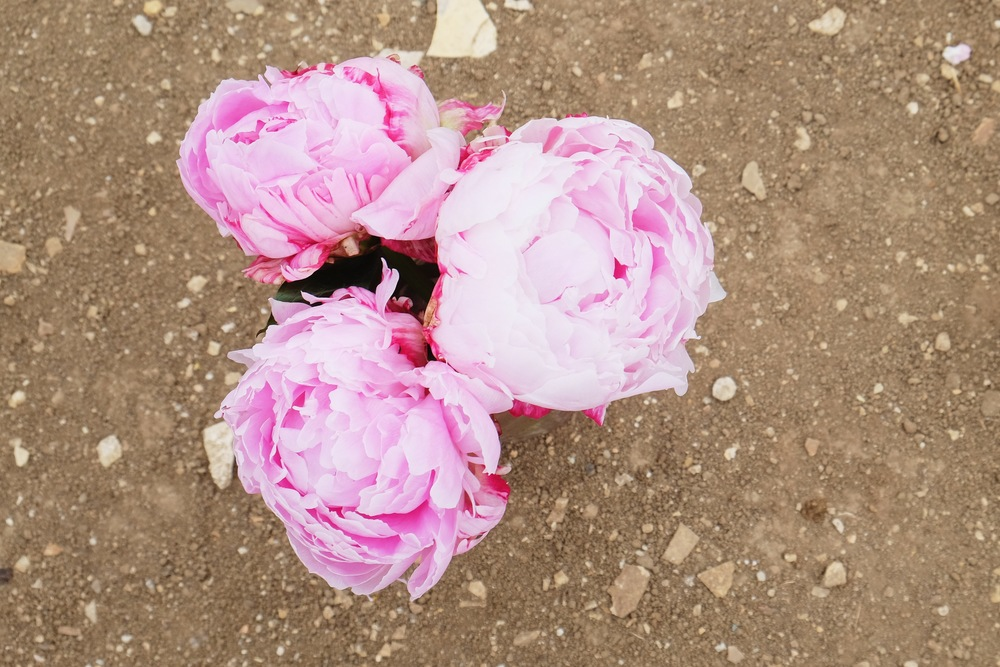 Palos Verdes Proposal Flowers | Forever Taeken Weddings