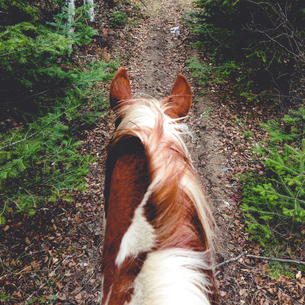 Forty-Minute Ride This slightly shorter ride is ideal for families with young children looking for that first safe and enjoyable horseback experience. The ride follows our well-maintained trails through a beautiful forest setting. See rates HERE.