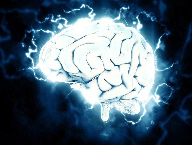 brain_grow.jpg