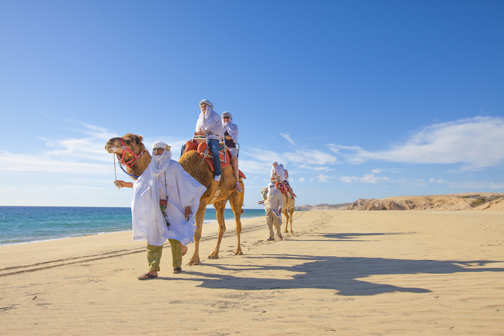 Camel walk along the Pacific Ocean