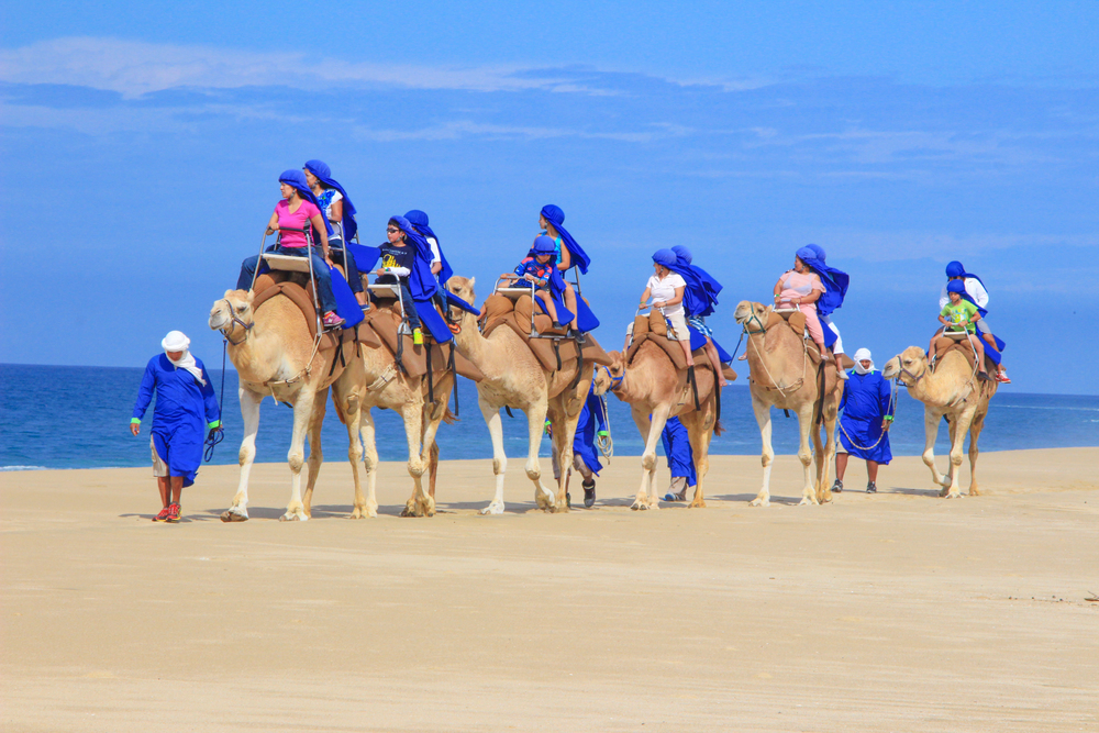 Camel Safari Excursion