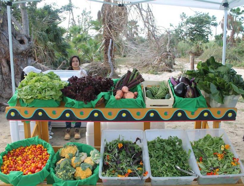 sjdc organic market.jpg