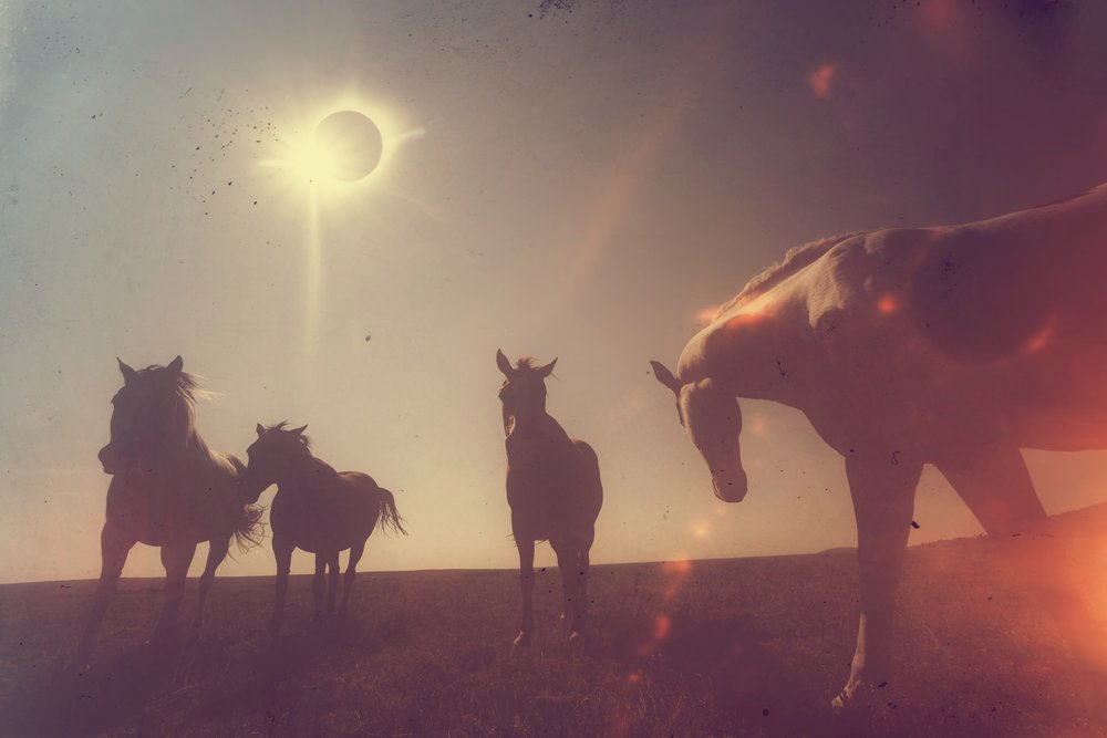 The Four Horses Of The Apocalypse: one of 100 uniquely filtered, hand-signed, hand-numbered prints available from Charlie Stout Photography