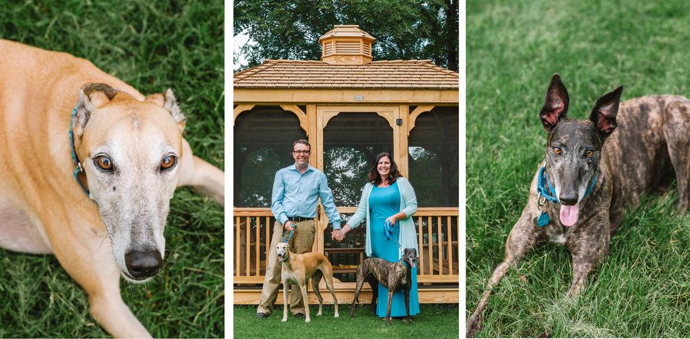 greyhound triptych.jpg