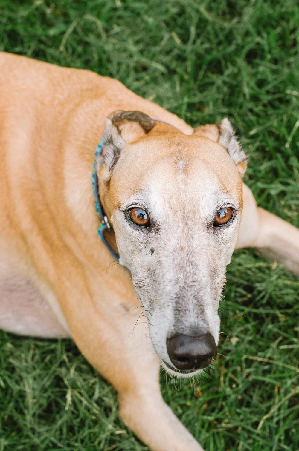 160825_Helen, Shane, & the greyhounds_4.JPG
