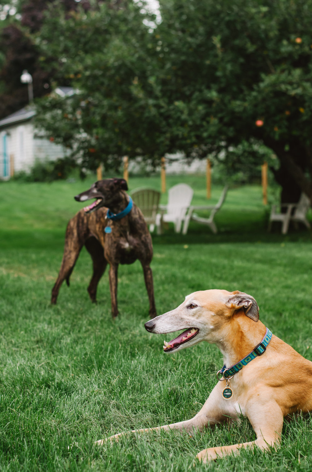 160825_Helen, SHane, & the greyhounds_66.JPG