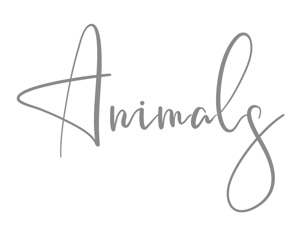Animals-grey_Mei Lin Barral Photography.png