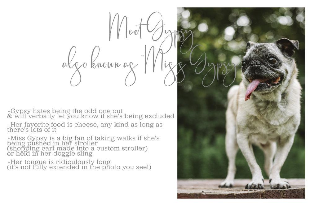 Meet Gypsy Full-grey_Mei Lin Barral Photography.jpg