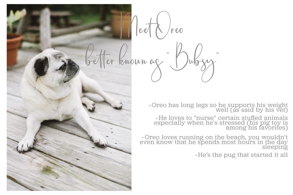 Meet Oreo Full-grey_Mei Lin Barral Photography.jpg