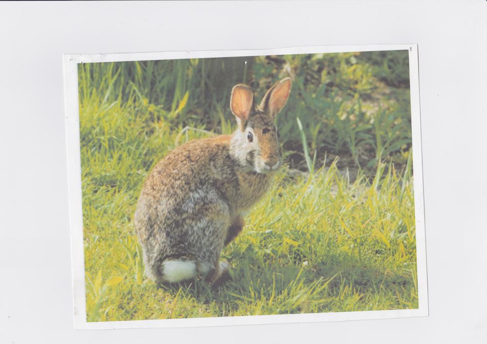 Rabbit   Printed 2015 Scanned October 2018