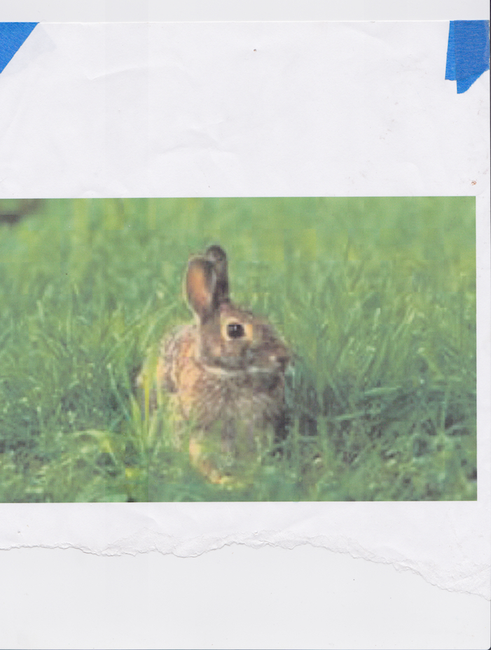Rabbit   Printed 2016 Scanned October 2018