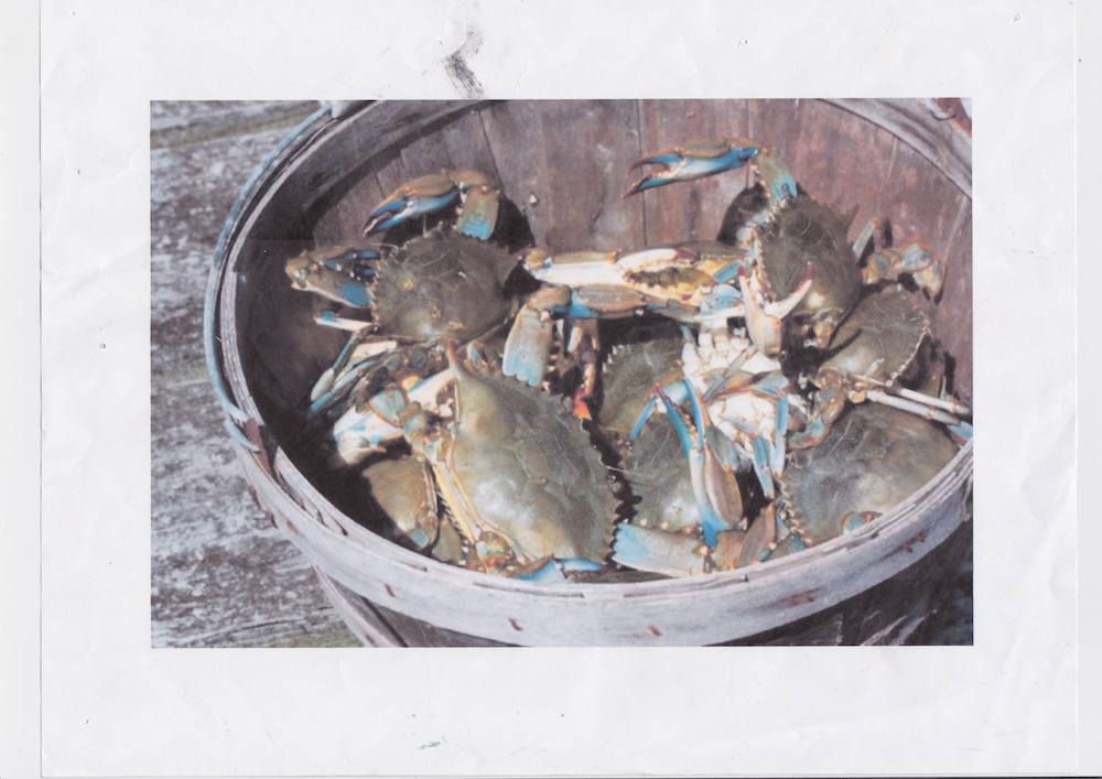 crab pot date unknown Scanned October 2018
