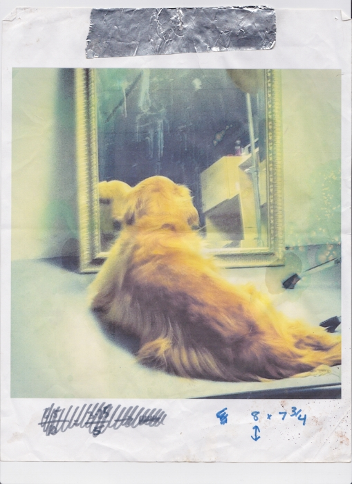 Karen's partner's dog Ruby staring at herself in the mirror  Printed 2014 Scanned 2017